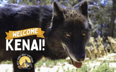 Welcome, Kenai!