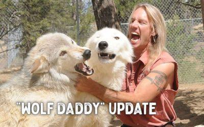 """""""Wolf Daddy"""" Update"""