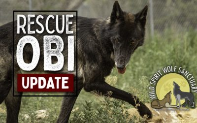New Rescue Obi Update