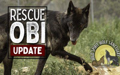 New Rescue Obi Update