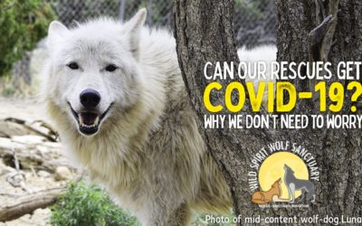 Can Our Rescues Get COVID-19?  Why We Don't Need to Worry