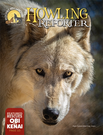 The Howling Reporter, November, 2020 Cover