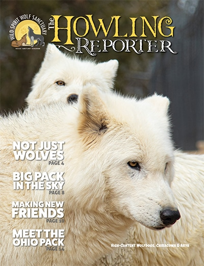 May 2021 Howling Reporter Cover