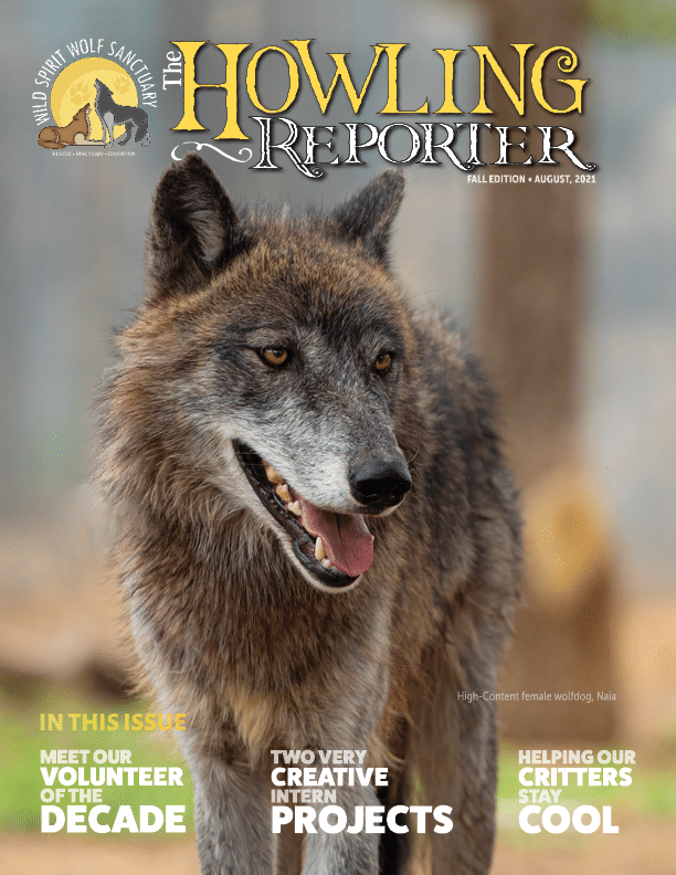 Fall 2021 Howling Reporter cover