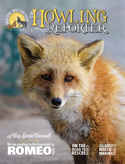 The Howling Reporter, February, 2021 Cover