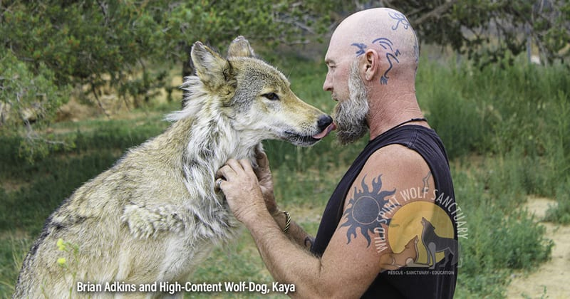 Wolf-Dog Ownership:  U.S. Regulations and Laws