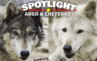 Spotlight: Argo & Cheyenne