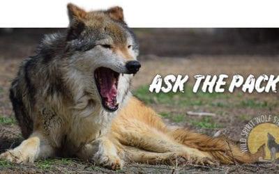 Ask The Pack – What initially prompted or inspired you to apply to become a part of the WSWS team?