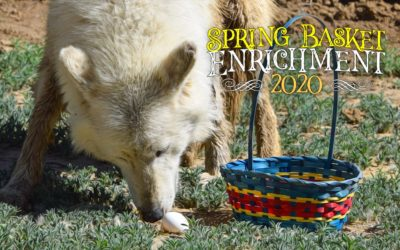 Spring Basket Enrichment 2020